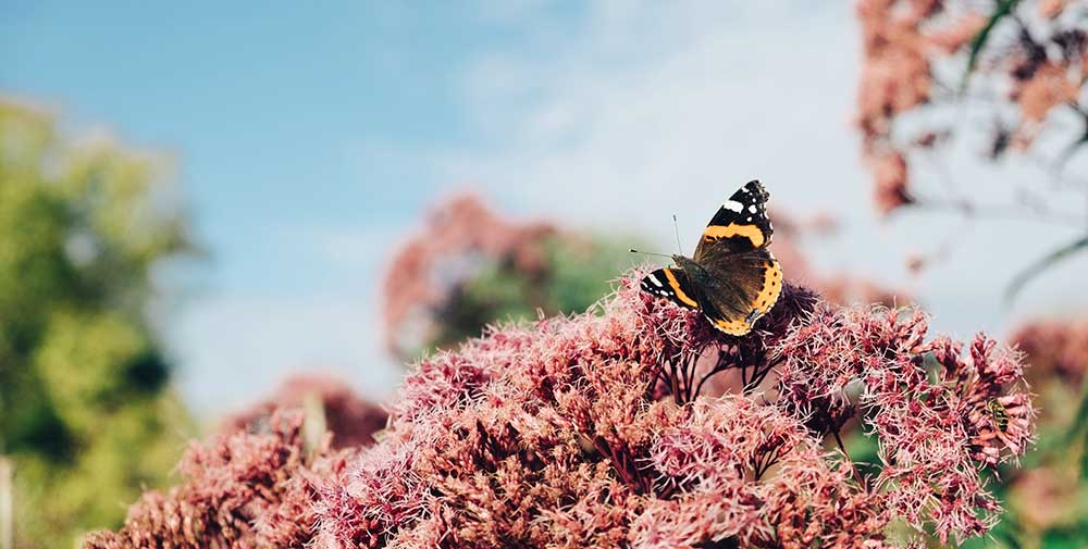La vita di una farfalla